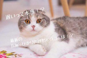 IIJmioひかり猫画像